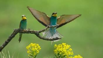 bee-eater-display.jpg